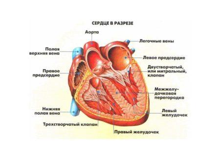 Нарушение внутрижелудочковой проводимости сердца у детей