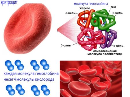 Гемоглобин 48 у женщины