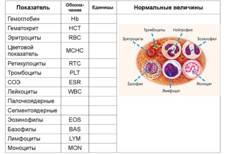 Аббревиатура лейкоцитов в анализе крови