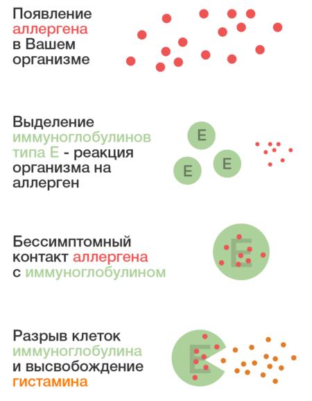 Показатели иммуноглобулина е