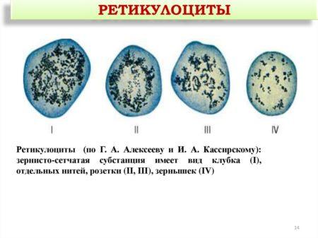 Норма ретикулоцитов в клиническом анализе крови