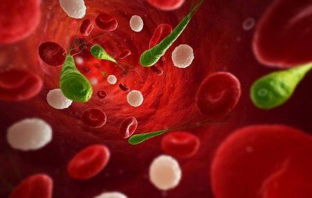 Как готовится к биохимии крови