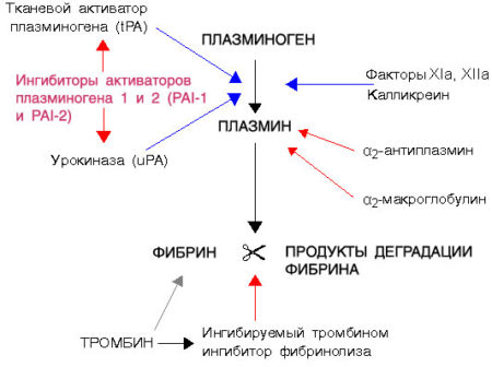 Плазминоген повышен при беременности