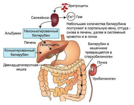 боль во всех суставах повышен билирубин