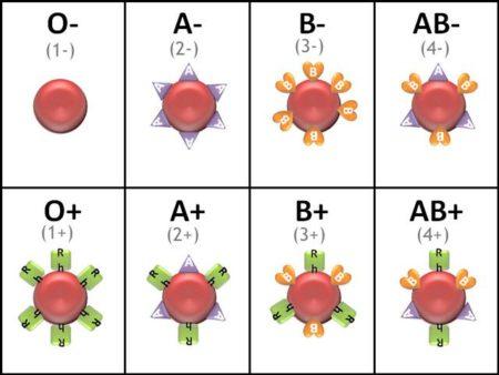 Анализ на антитела при отрицательной группе крови