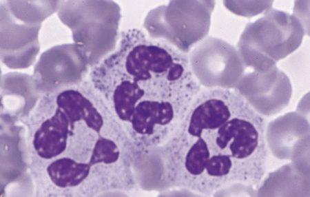 Нормальный анализ крови у детей 8 лет