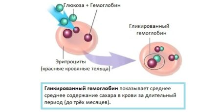 Гемоглобин 101 у женщин