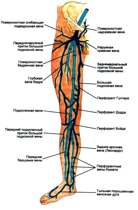 Тромб в ноге – симптомы, причины, диагностика и методы лечения