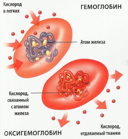 Гемоглобин у мужчин выше нормы
