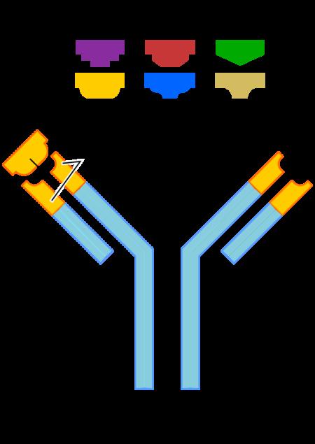 Анализ крови на генетическую предрасположенность к тромбофилии