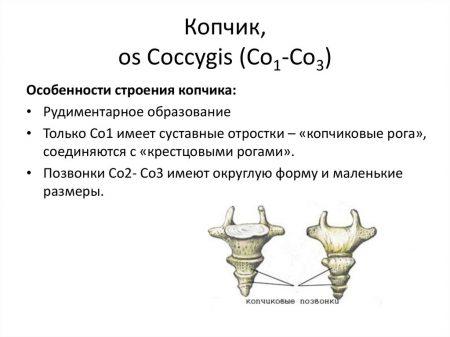 Копчиковая кость