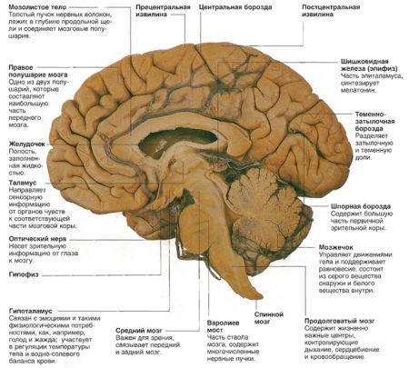 При ангиопатии болит голова